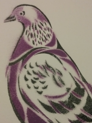 Pigeon, 2017